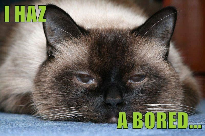 Cat - I HAZ A BORED.