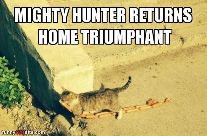 Wild cat - MIGHTY HUNTER RETURNS HOME TRIUMPHANT funnyCATsite.com