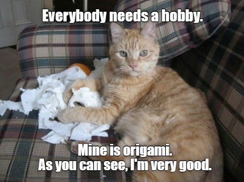 Cat - Everybody needs a hobby. Mine is origami. As you can see, I'm very good.