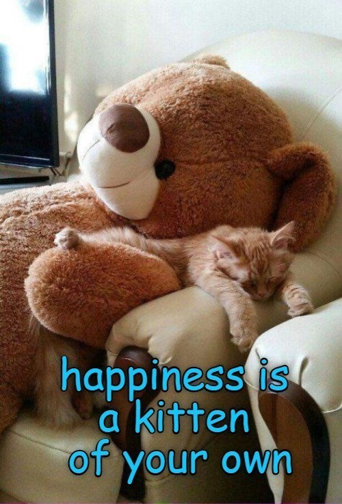 Stuffed toy - happiness is a kitten of your own