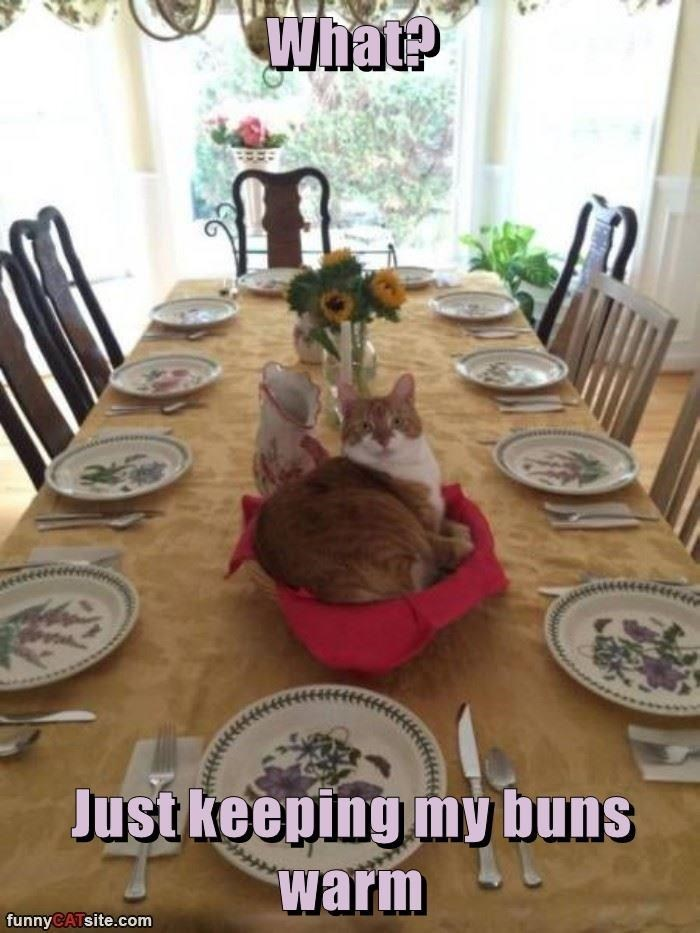 Meal - Whate Just keeping my buns warm funnyCATsite.com