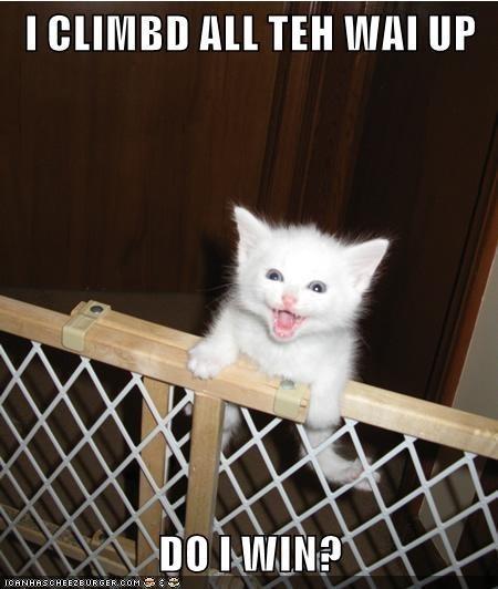 Cat - I CLIMBD ALL TEH WAI UP DO I WIN? ICANHASCHEEZBURGER.COM