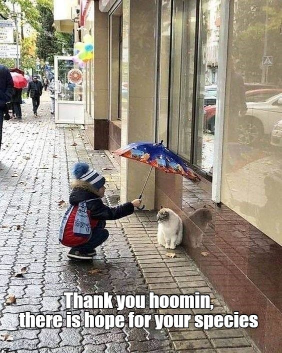 Snapshot - Thank you hoomin, there is hope for your species