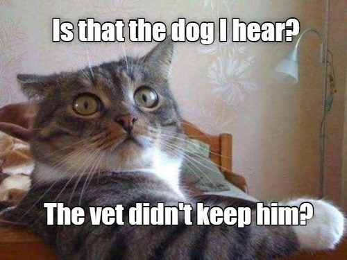 Cat - Is that the dog Ihear? The vet didn't keep him?
