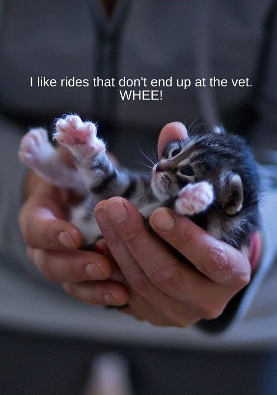 Cat - I like rides that don't end up at the vet. WHEE!