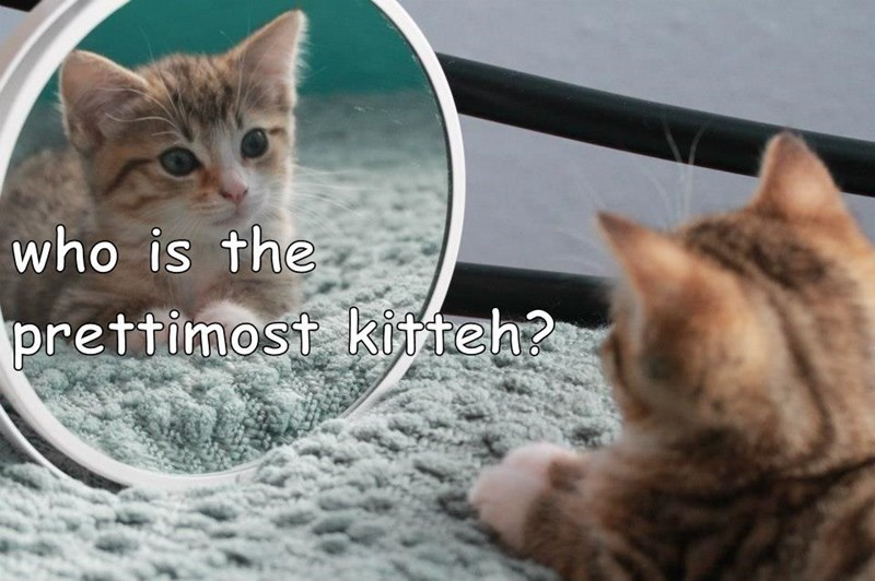 Cat - who is the prettimost kifteh?