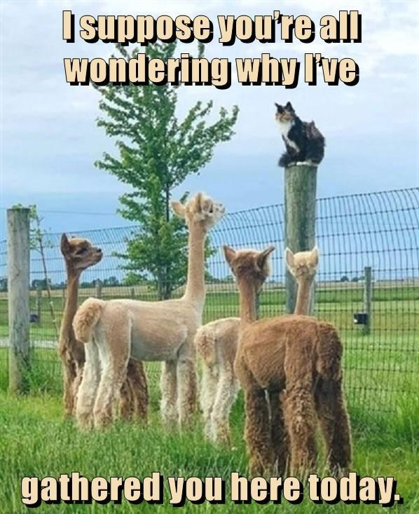 Alpaca - Isuppose vou're all Wondering why Ive gathered you here today.