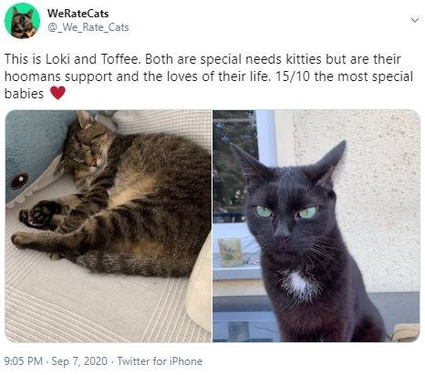 Cat - WeRateCats @_We_Rate_Cats This is Loki and Toffee. Both are special needs kitties but are their hoomans support and the loves of their life. 15/10 the most special babies 9:05 PM - Sep 7, 2020 - Twitter for iPhone