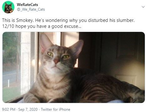 Cat - WeRateCats @_We_Rate_Cats This is Smokey. He's wondering why you disturbed his slumber. 12/10 hope you have a good excuse. 9:02 PM - Sep 7, 2020 - Twitter for iPhone
