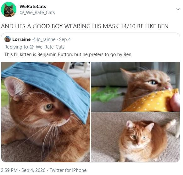 Cat - WeRateCats @_We_Rate_Cats AND HES A GOOD BOY WEARING HIS MASK 14/10 BE LIKE BEN OLorraine @lo_rainne Sep 4 Replying to @_We_Rate_Cats This l'il kitten is Benjamin Button, but he prefers to go by Ben. 2:59 PM Sep 4, 2020 - Twitter for iPhone