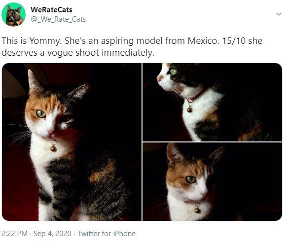 Cat - WeRateCats @_We_Rate_Cats This is Yommy. She's an aspiring model from Mexico. 15/10 she deserves a vogue shoot immediately. 2:22 PM Sep 4, 2020 - Twitter for iPhone