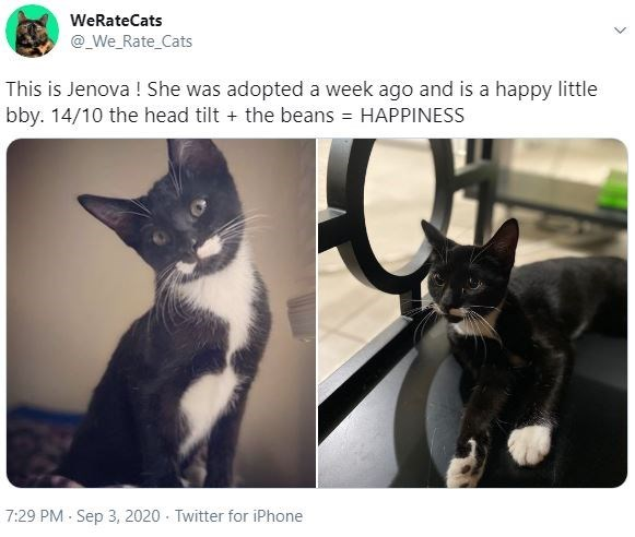 Cat - WeRateCats @_We_Rate_Cats This is Jenova ! She was adopted a week ago and is a happy little bby. 14/10 the head tilt + the beans = HAPPINESS 7:29 PM Sep 3, 2020 Twitter for iPhone
