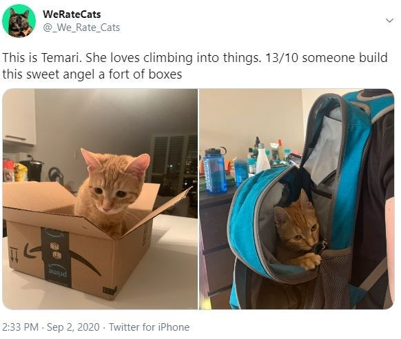 Cat - WeRateCats @_We_Rate_Cats This is Temari. She loves climbing into things. 13/10 someone build this sweet angel a fort of boxes prime 2:33 PM Sep 2, 2020 - Twitter for iPhone