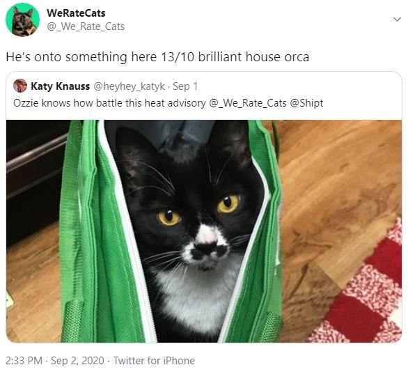 Cat - WeRateCats @_We_Rate_Cats He's onto something here 13/10 brilliant house orca Katy Knauss @heyhey_katyk · Sep 1 Ozzie knows how battle this heat advisory @_We_Rate_Cats @Shipt 2:33 PM · Sep 2, 2020 · Twitter for iPhone