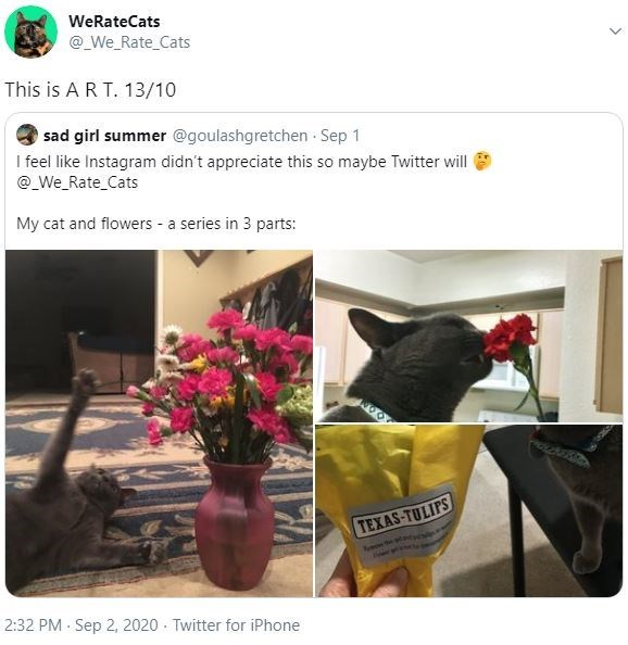 Flowerpot - WeRateCats @_We_Rate_Cats This is A R T. 13/10 sad girl summer @goulashgretchen Sep 1 I feel like Instagram didn't appreciate this so maybe Twitter will @_We_Rate_Cats My cat and flowers - a series in 3 parts: TEXAS-TULIPS 2:32 PM Sep 2, 2020 Twitter for iPhone