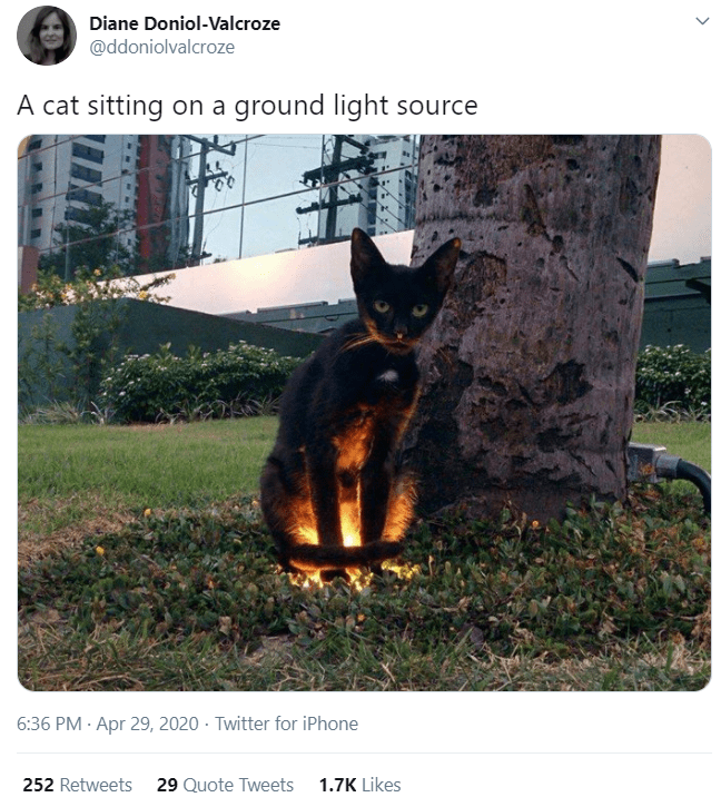 Canidae - Diane Doniol-Valcroze @ddoniolvalcroze A cat sitting on a ground light source 6:36 PM · Apr 29, 2020 · Twitter for iPhone 252 Retweets 29 Quote Tweets 1.7K Likes