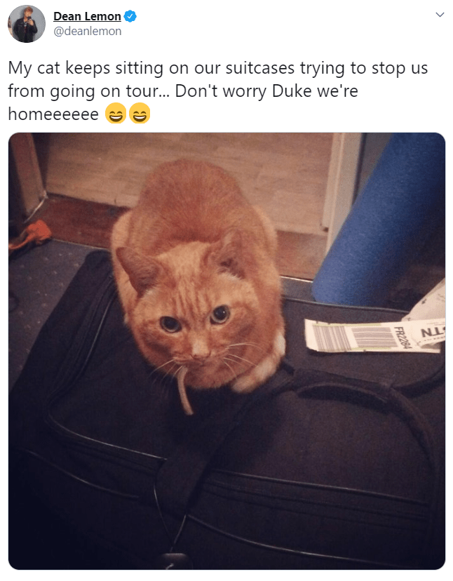 Cat - Dean Lemon @deanlemon My cat keeps sitting on our suitcases trying to stop us from going on tour... Don't worry Duke we're homeeeeee e S FR2284