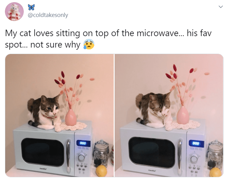 Product - @coldtakesonly My cat loves sitting on top of the microwave. his fav spot. not sure why 000 00 Cafed