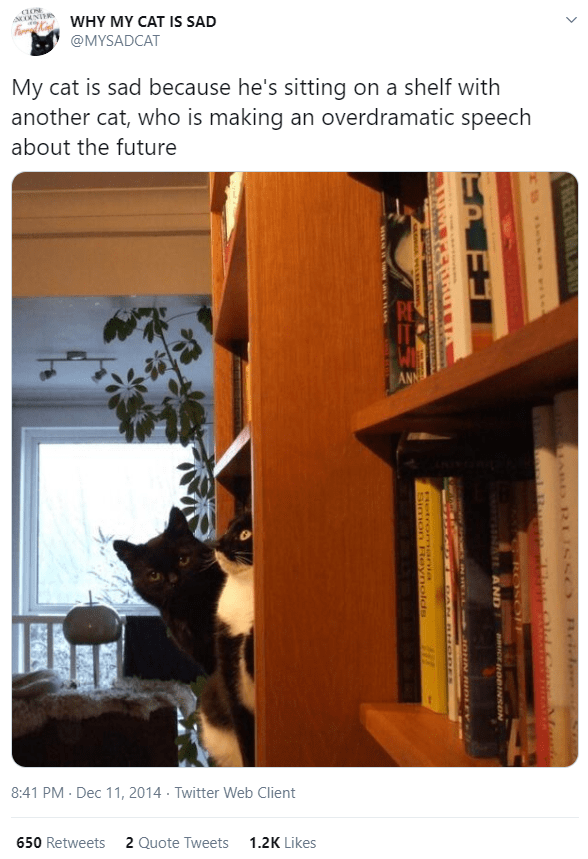 Shelf - WHY MY CAT IS SAD @MYSADCAT My cat is sad because he's sitting on a shelf with another cat, who is making an overdramatic speech about the future 8:41 PM - Dec 11, 2014 · Twitter Web Client 650 Retweets 2 Quote Tweets 1.2K Likes MABD RUSS O Beid SYESNANE AND pCE RORINNON INHEL L 1LOHN RIDLEY- मप र हण्प Hetrormania Simon Reynolds