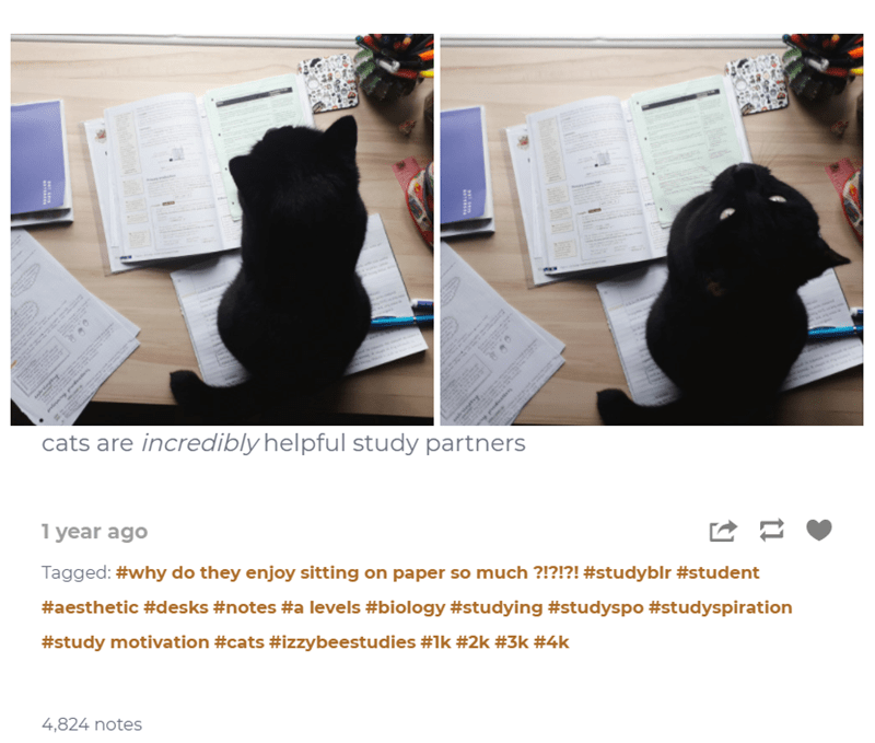 Black - cats are incredibly helpful study partners 1 year ago Tagged: #why do they enjoy sitting on paper so much ?!?!?! #studyblr #student #aesthetic #desks #notes #a levels #biology #studying #studyspo #studyspiration #study motivation #cats #izybeestudies #1k #2k #3k #4k 4,824 notes