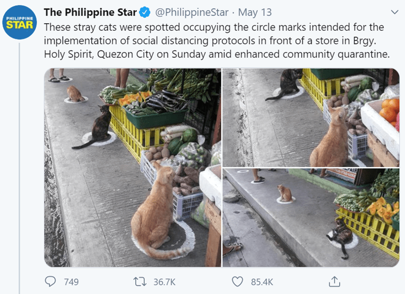 Adaptation - The Philippine Star @PhilippineStar May 13 STAR These stray cats were spotted occupying the circle marks intended for the implementation of social distancing protocols in front of a store in Brgy. Holy Spirit, Quezon City on Sunday amid enhanced community quarantine. PHILIPPINE 749 27 36.7K 85.4K
