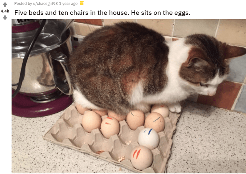 Cat - 1 Posted by u/chaosgirl93 1 year ago 4.4k Five beds and ten chairs in the house. He sits on the eggs.