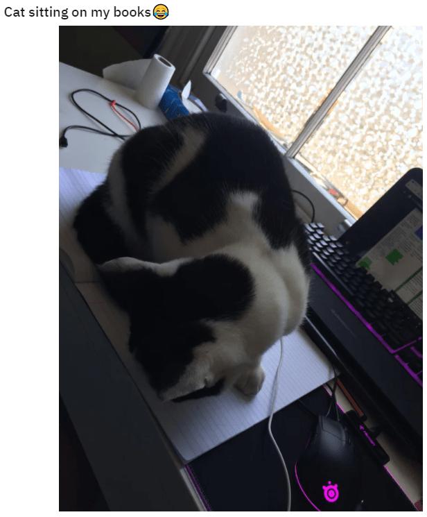 Cat - Cat sitting on my bookse
