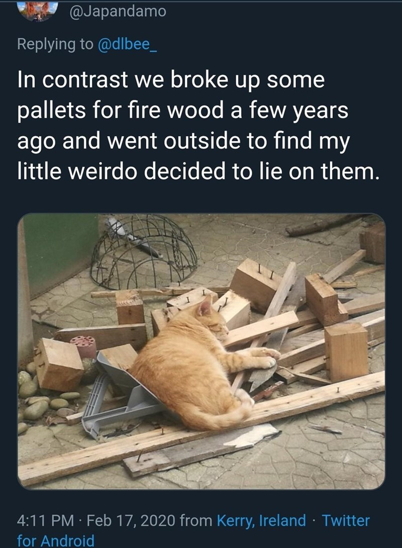 Adaptation - @Japandamo Replying to @dlbee_ In contrast we broke up some pallets for fire wood a few years ago and went outside to find my little weirdo decided to lie on them. 4:11 PM · Feb 17, 2020 from Kerry, Ireland · Twitter for Android