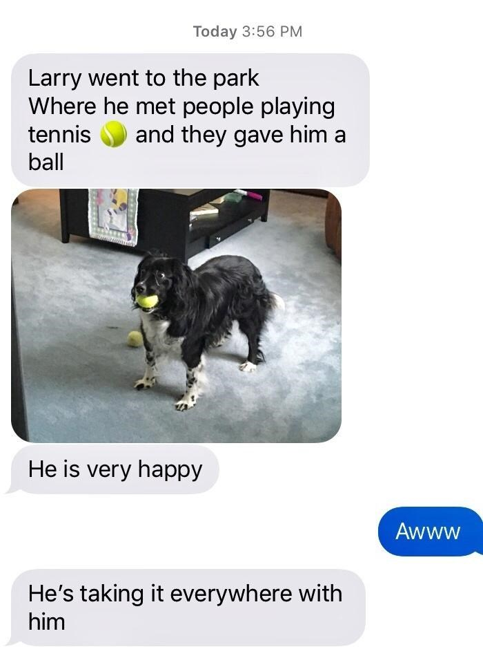 Dog - Today 3:56 PM Larry went to the park Where he met people playing and they gave him a tennis ball He is very happy Awww He's taking it everywhere with him