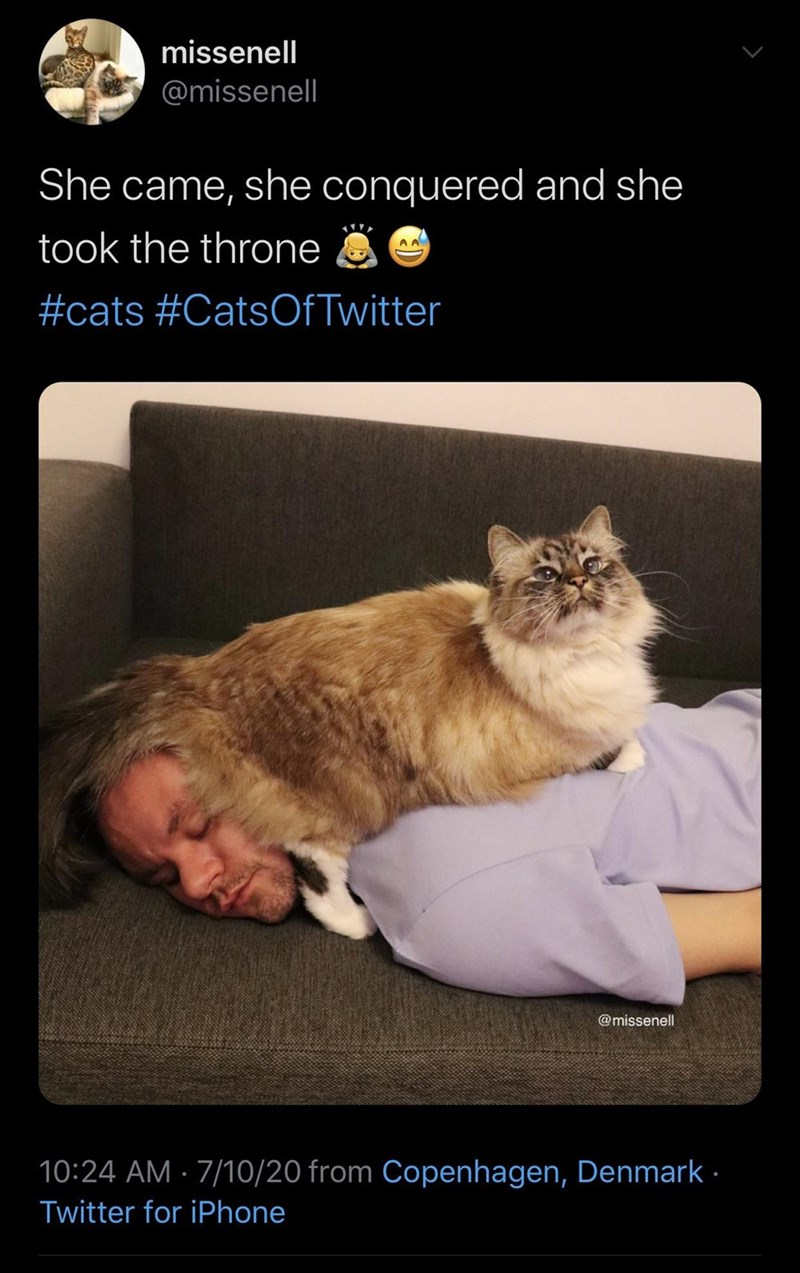 Cat - missenell @missenell She came, she conquered and she took the throne #cats #CatsOfTwitter @missenell 10:24 AM · 7/10/20 from Copenhagen, Denmark - Twitter for iPhone