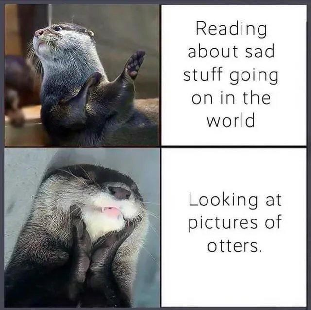 Adaptation - Reading about sad stuff going on in the world Looking at pictures of otters.