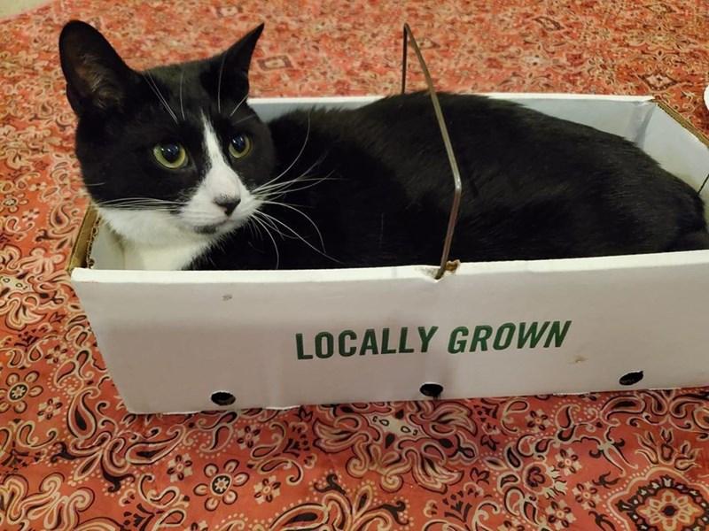 Cat - LOCALLY GROWN