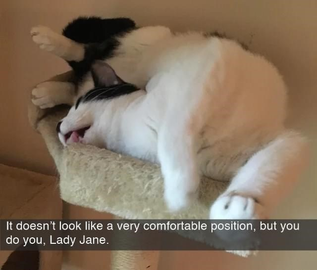 Cat - It doesn't look like a very comfortable position, but you do you, Lady Jane.