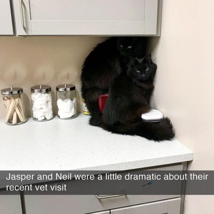 Cat - Jasper and Neil were a little dramatic about their recent vet visit