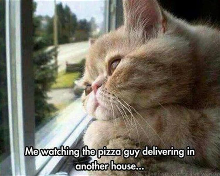 Me watching the pizza guy delivering in another house:,. cat looking longingly out of a window