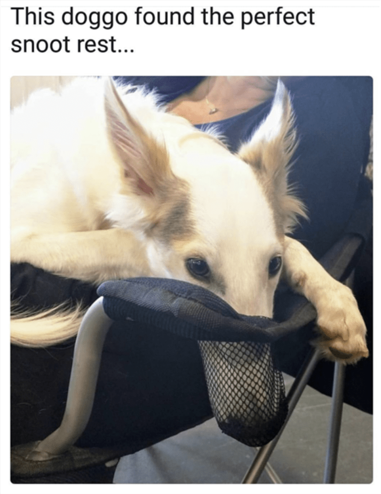 this doggo found the perfect snoot rest... dog with long nose in a cup holder