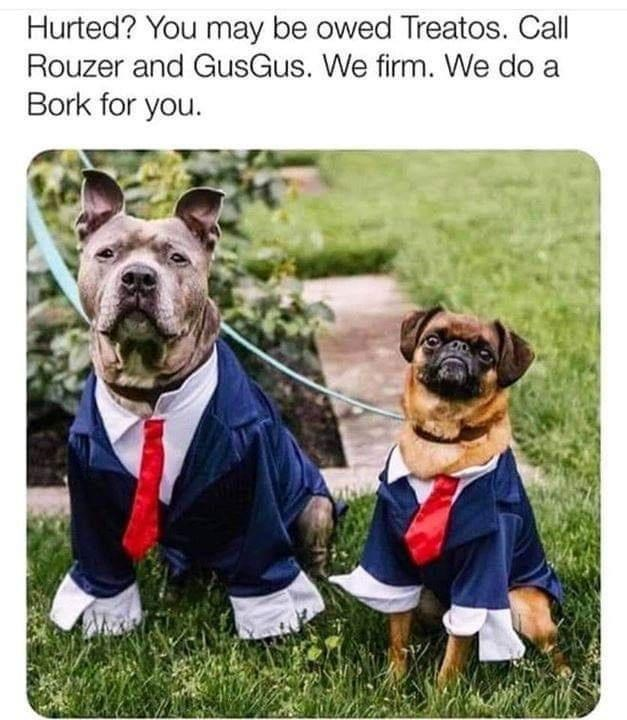 hurted? You may be owed Treatos. Call Rouzer and GusGus. We firm. We do a Bork for you. two dogs in suits lawyers