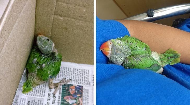 Parakeet - व करना बंढ नकद रं से पिले रल