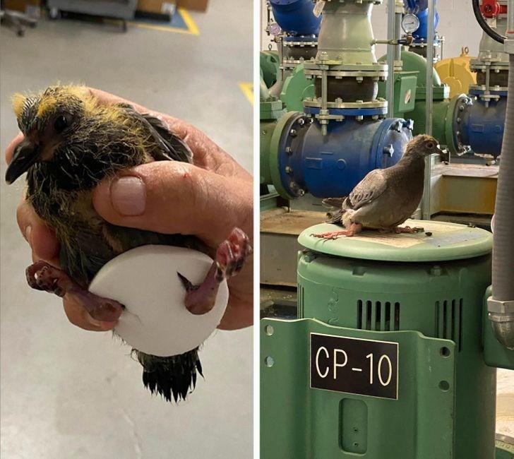 Bird - CP-10