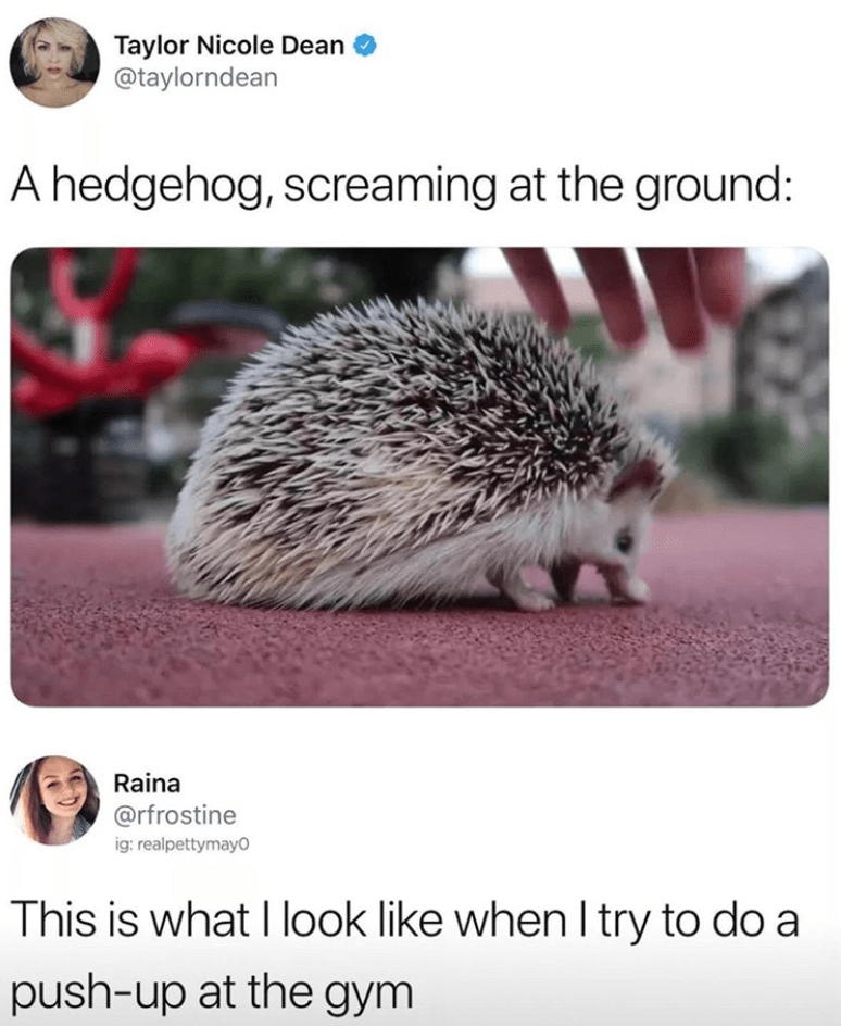 Taylor Nicole Dean @taylorndean A hedgehog, screaming at the ground: Raina @rfrostine This is what I look like when I try to do a push-up at the gym