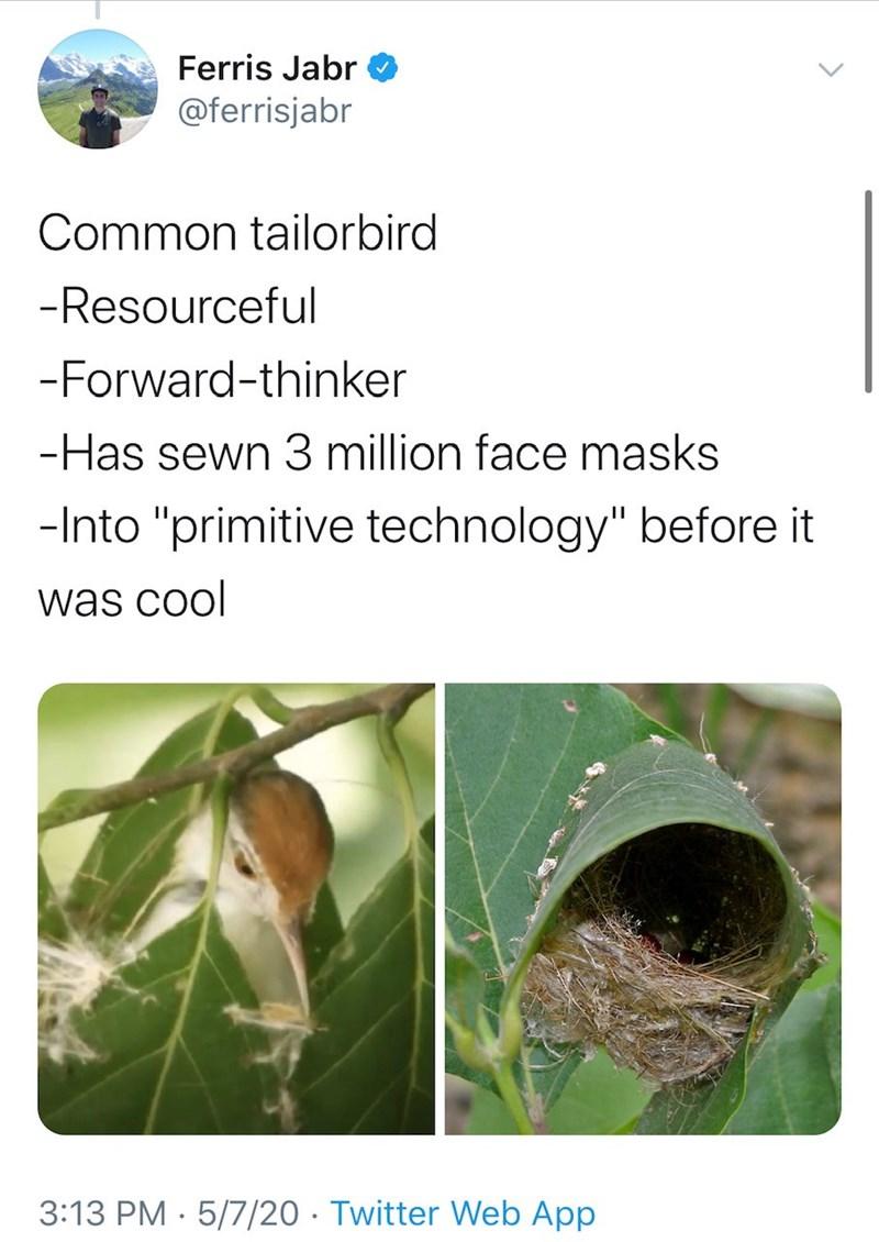 "Plant pathology - Ferris Jabr @ferrisjabr Common tailorbird -Resourceful -Forward-thinker -Has sewn 3 million face masks -Into ""primitive technology"" before it was cool 3:13 PM · 5/7/20 · Twitter Web App"