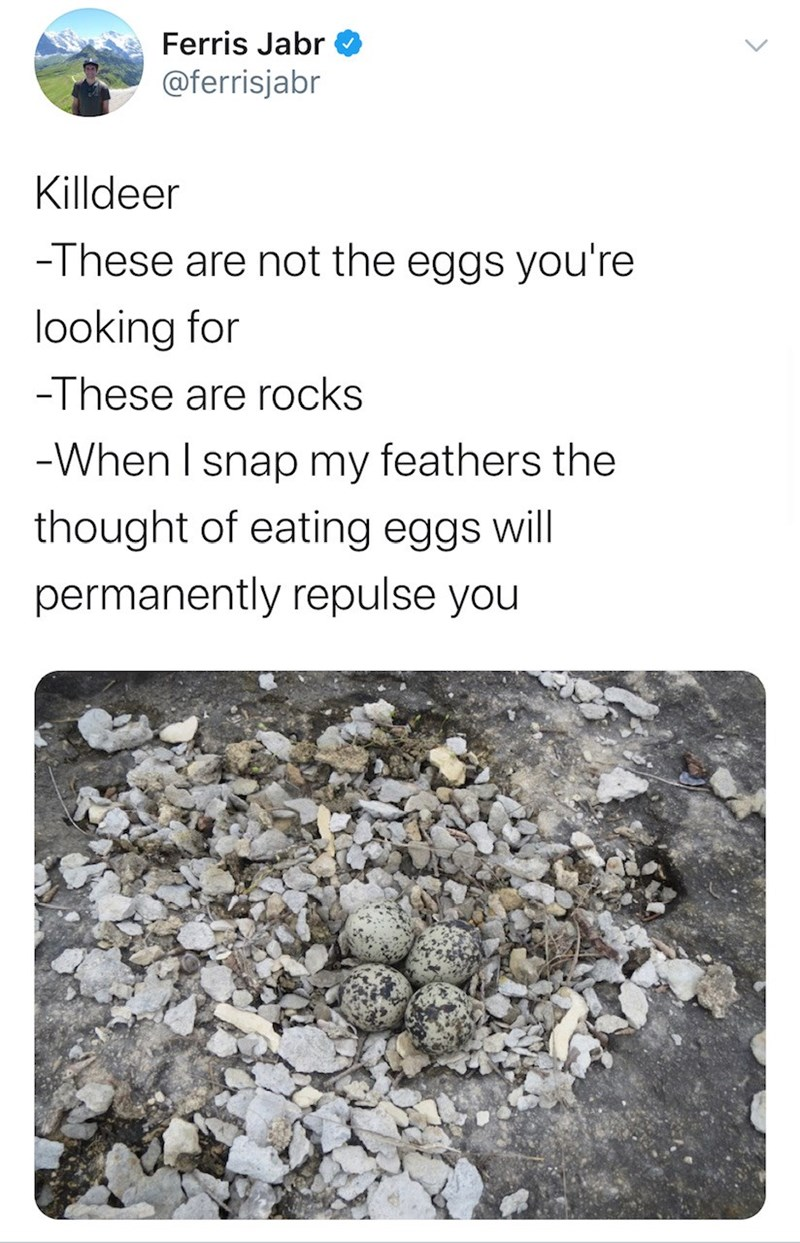 Text - Ferris Jabr @ferrisjabr Killdeer -These are not the eggs you're looking for -These are rocks -When I snap my feathers the thought of eating eggs will permanently repulse you