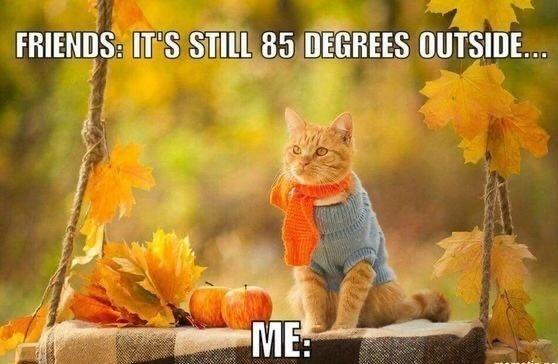 Cat - FRIENDS: IT'S STILL 85 DEGREES OUTSIDE... ME: