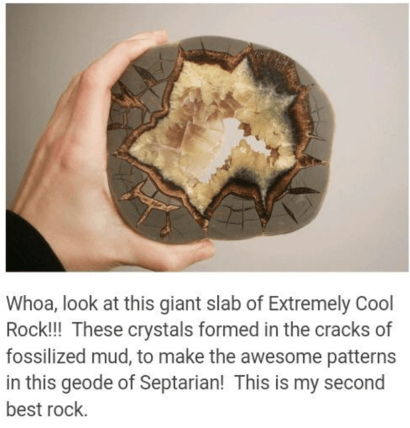 Adaptation - Whoa, look at this giant slab of Extremely Cool Rock!! These crystals formed in the cracks of fossilized mud, to make the awesome patterns in this geode of Septarian! This is my second best rock.