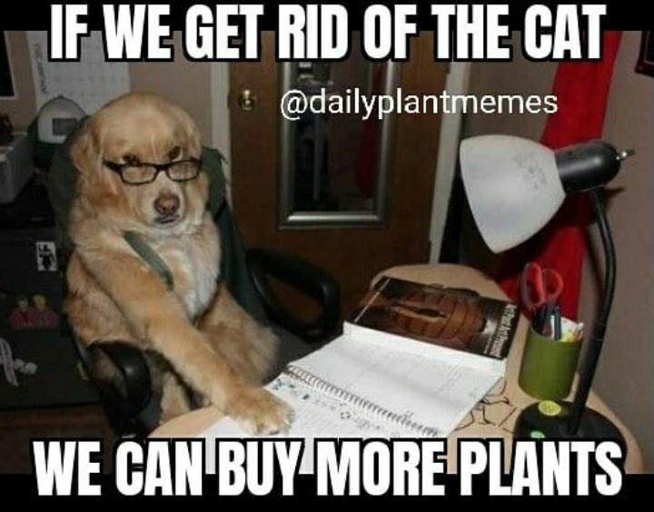 Dog - IF WE GET RID OF THE CAT ! @dailyplantmemes WE CAN BUY MORE PLANTS tPat At VWEANHW