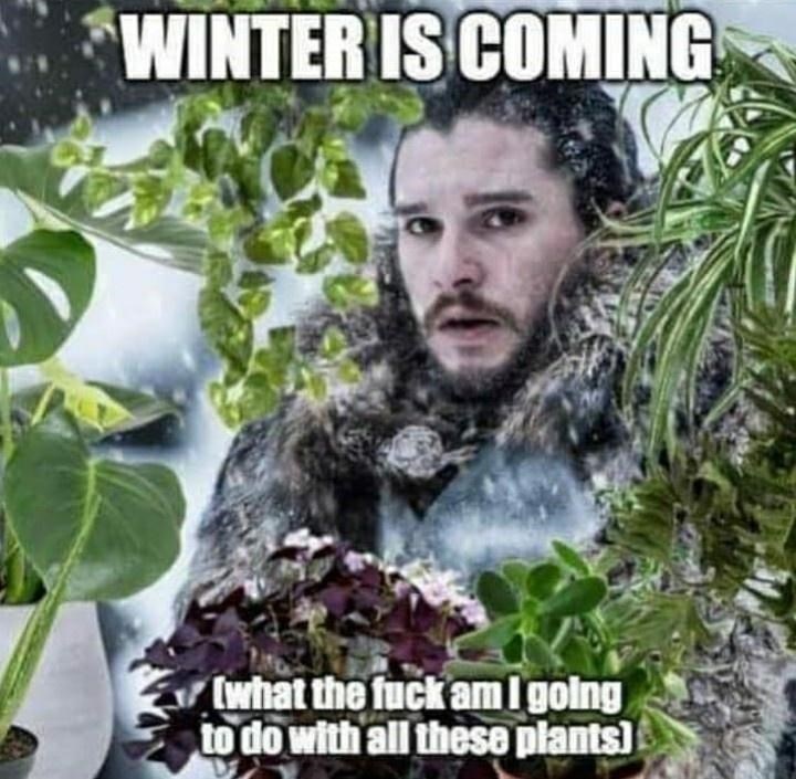 Tree - WINTER IS COMING (what the fuck amI golng to do with all these plants)