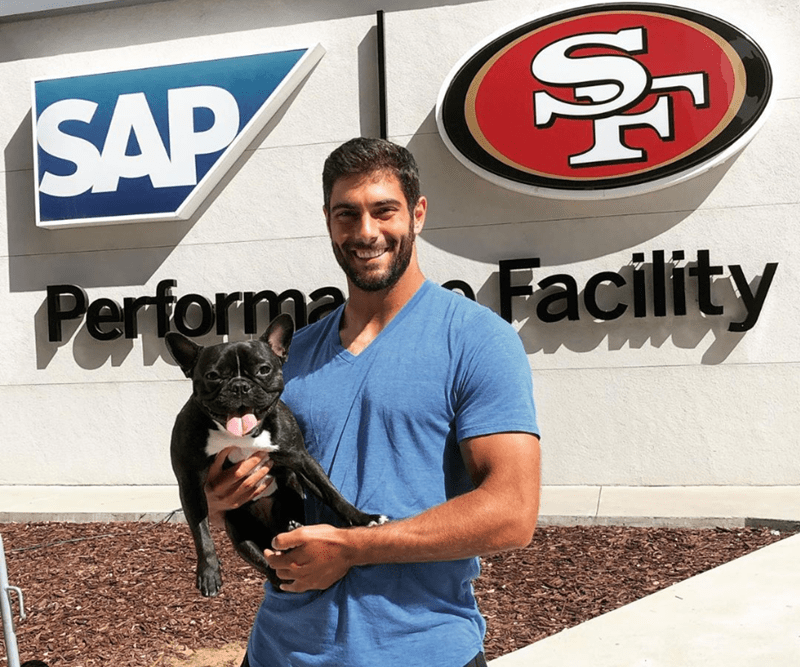nfl players cute dogs nfl bulldog emotional support dog animals - 9548549