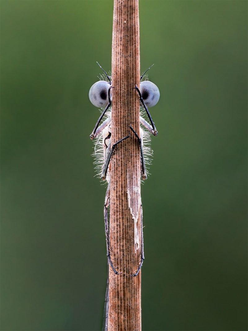 Dragonflies and damseflies