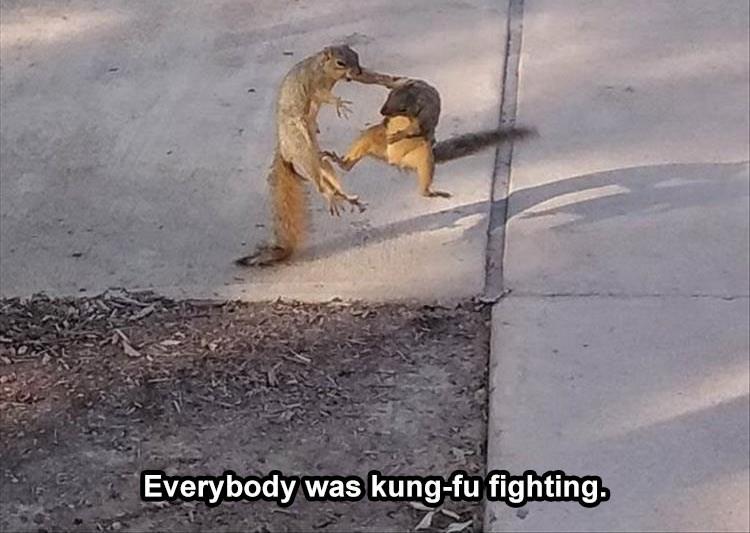 Street dog - Everybody was kung-fu fighting.