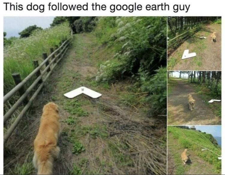 Nature - This dog followed the google earth guy